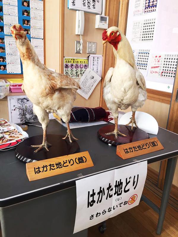 筑紫野市内の小中学校給食で「はかた地どり」のガメ煮が提供されました♪3
